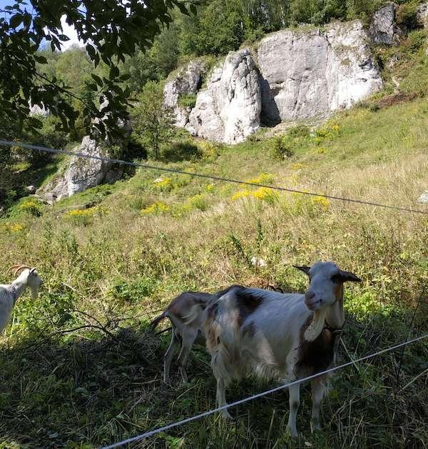 DOlina Kobylańska - wspinaczka skałkowa